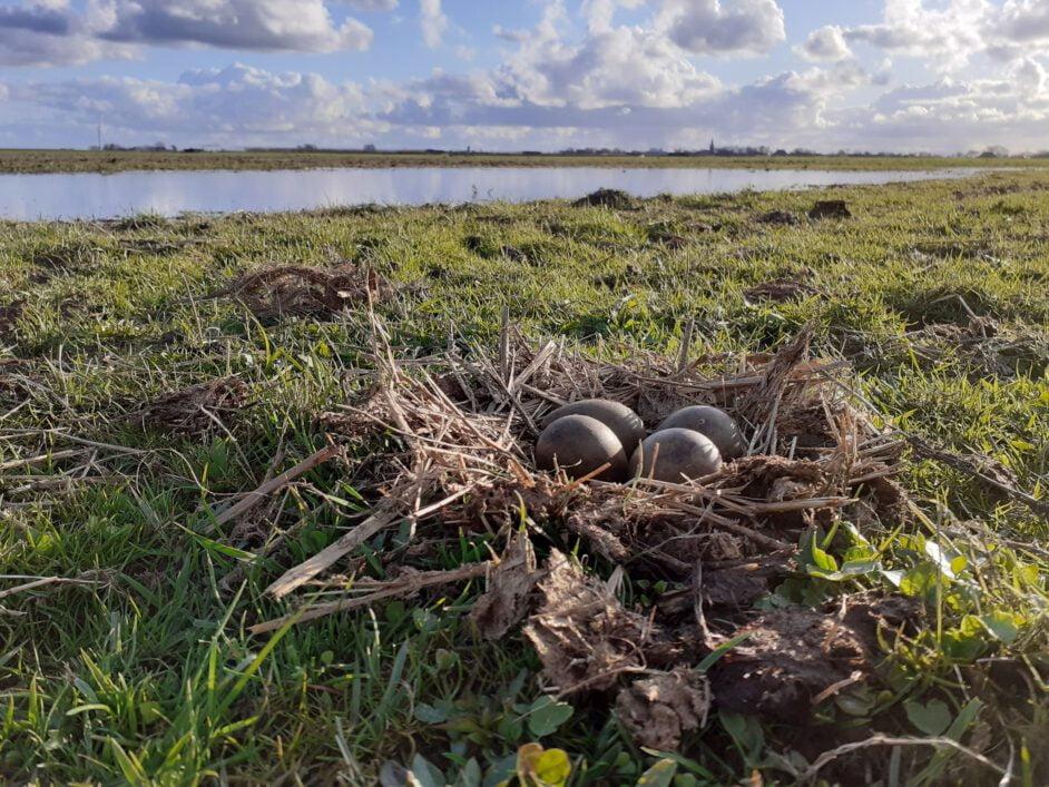 1e nest Gruttoland 2021
